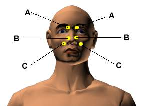 Acupressure Points for Relieving Sinus and Hay Fever ...