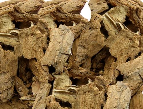 Ailanthus Bark (Chun Pi)