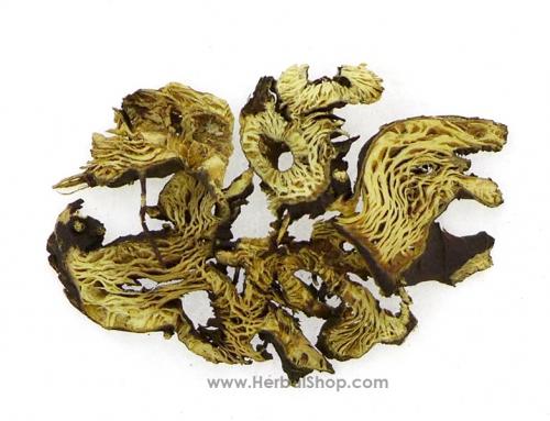 Chinese Cimicifuga Rhizome (Sheng Ma)