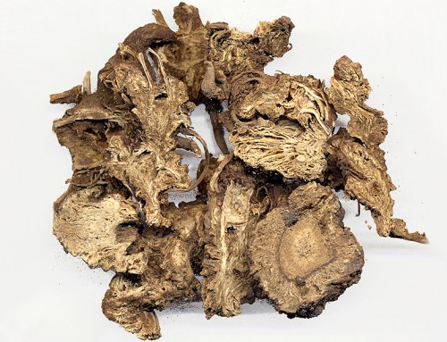 Chinese Lovage Root (Gao Ben)