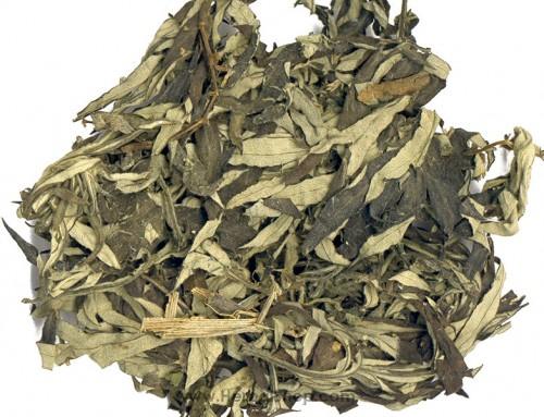Chinese Mugwort Leaf (Ai Ye)