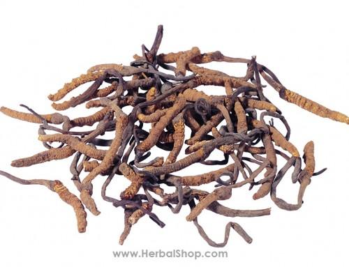 Cordyceps (Dong Chong Xia Cao)