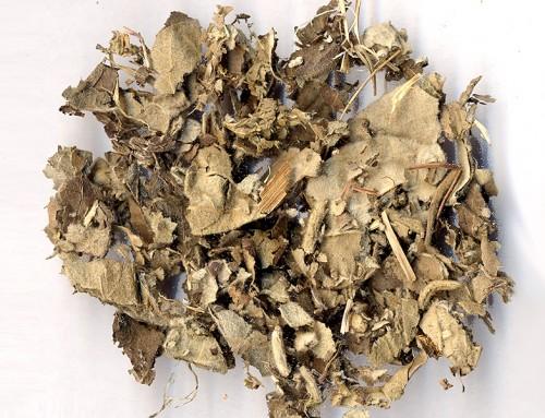 Hairy Birthwort (Xun Gu Feng)