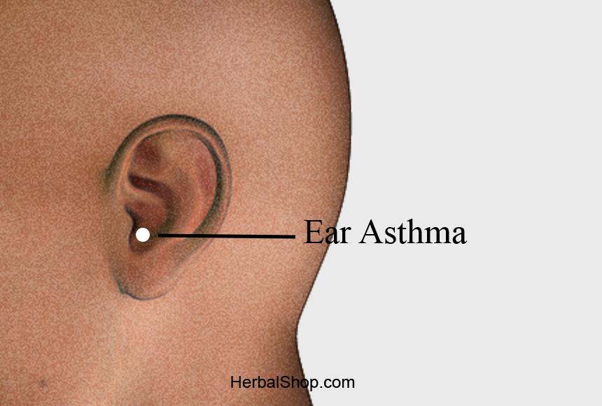 Acupressure Point Ear Asthma - HerbalShop