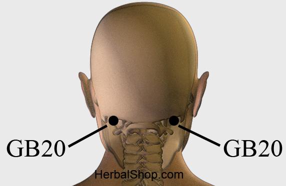 Acupressure Point GB20 – HerbalShop