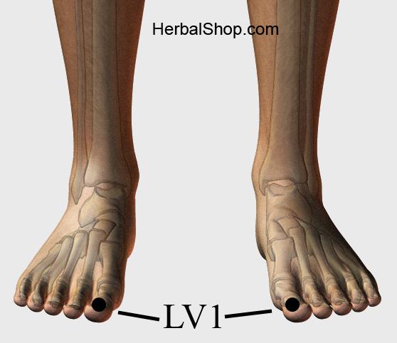 Acupressure Point LV1 (also known as LIV 1) – HerbalShop