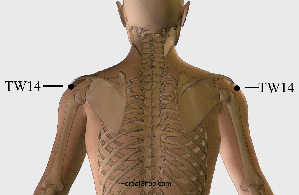 jian shu syracuse acupuncture benefits - photo#24