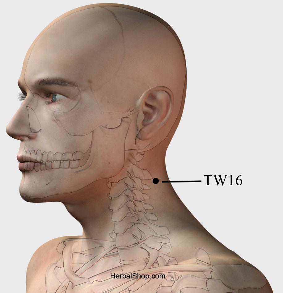Acupressure Point TW16 – HerbalShop
