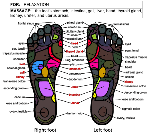 Foot Diagram For Foot Massages Diy Enthusiasts Wiring Diagrams
