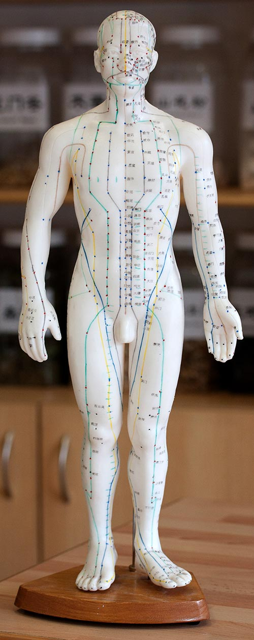 acupressure-model