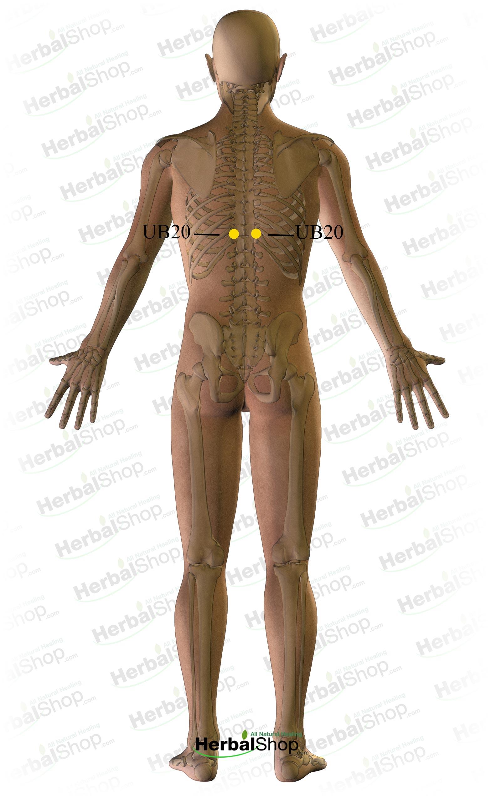 Backache - Middle