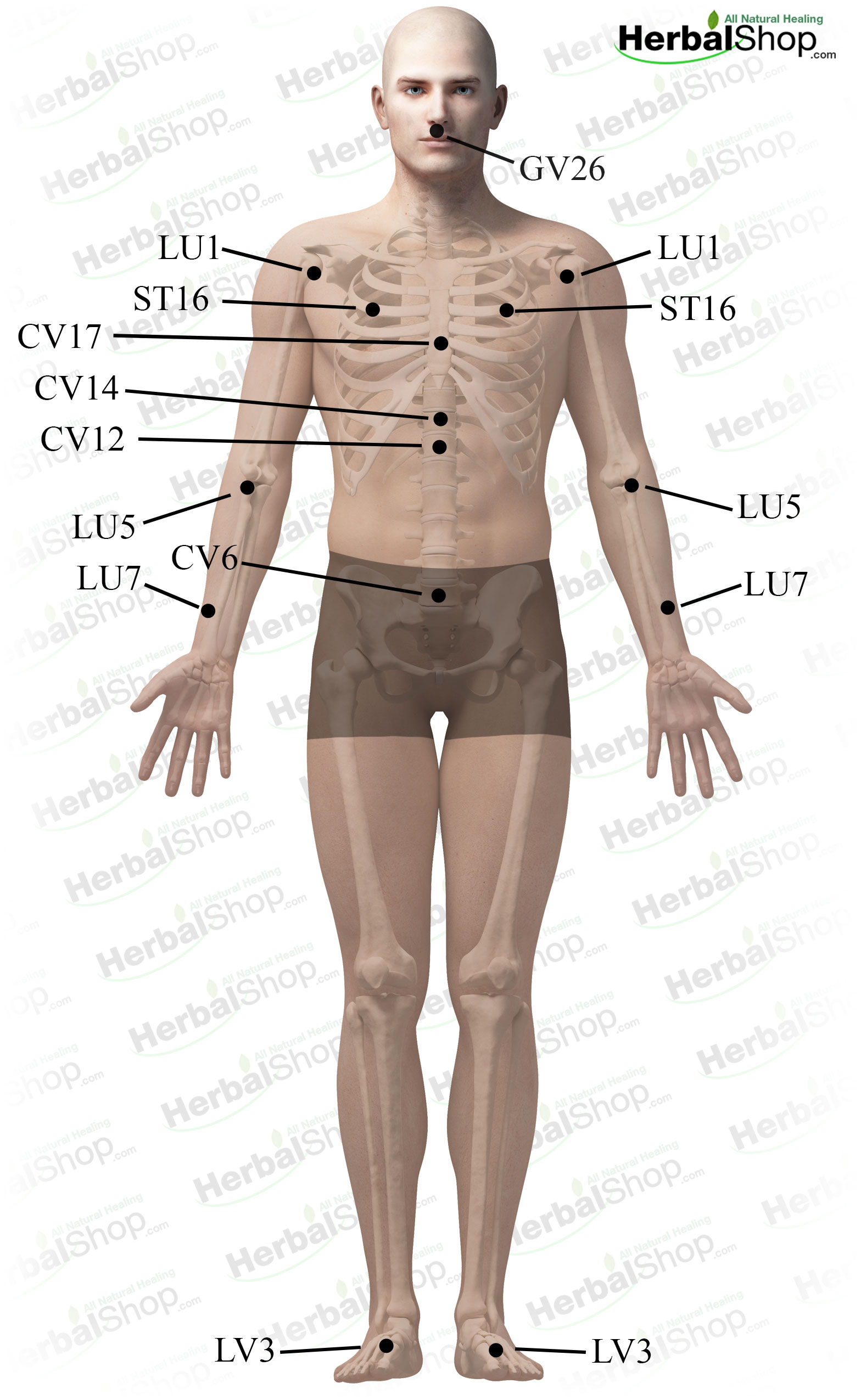 acupressure massage for shortness of breath – herbalshop, Skeleton