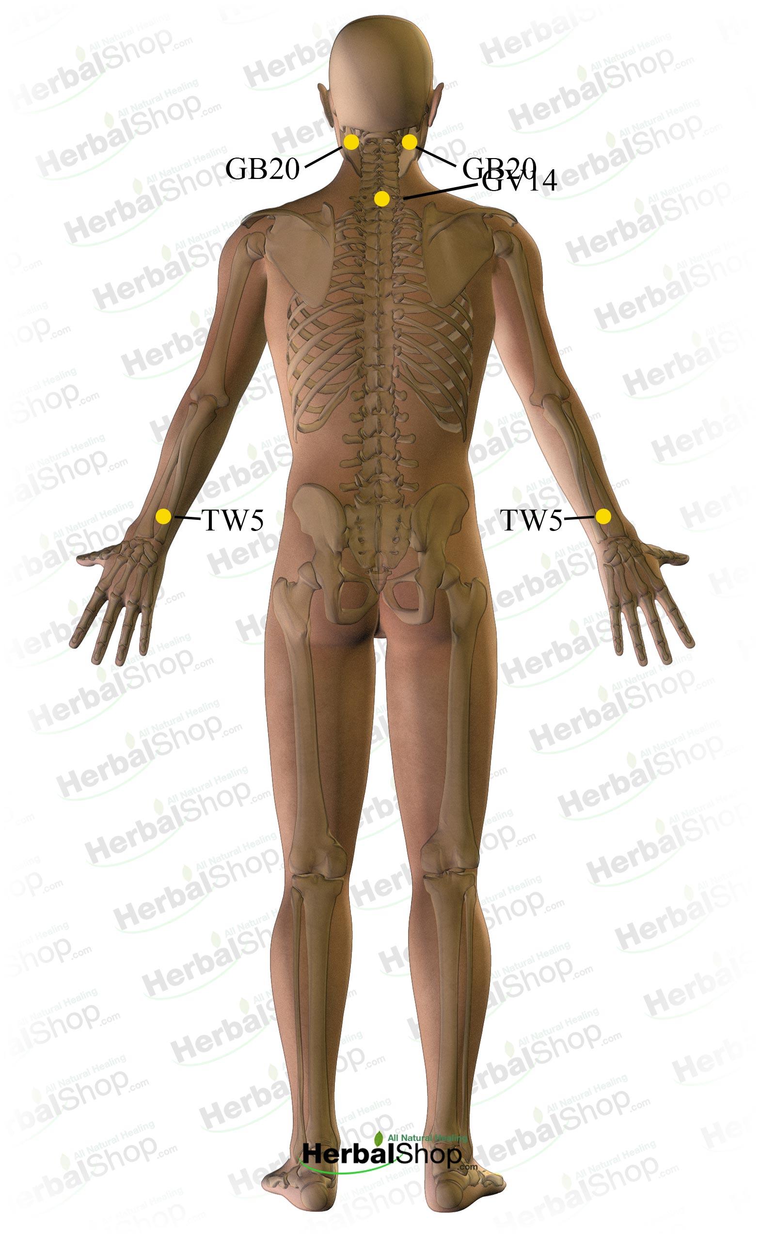 Backache - Upper (Upper Backache)